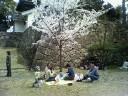 福山城で花見
